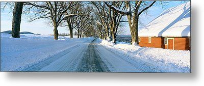 Maple Trees In Snow, Lyndonville Metal Print by Panoramic Images