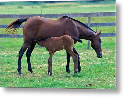 Mare And Foal Metal Print by Gail Maloney