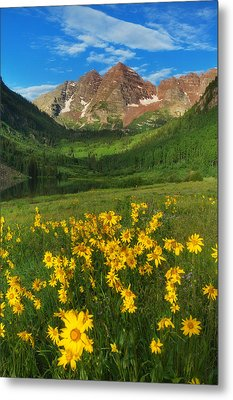 Maroon Summer Metal Print by Darren  White