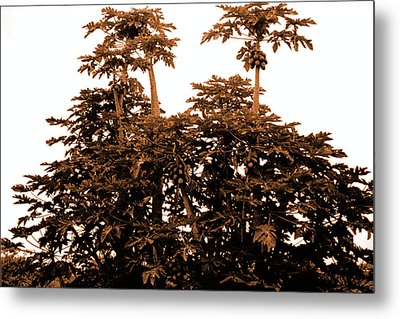 Maui Coconut Palms Metal Print by J D Owen