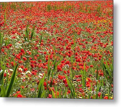 Meadow Covered With Red Poppies Metal Print by Jose Elias - Sofia Pereira