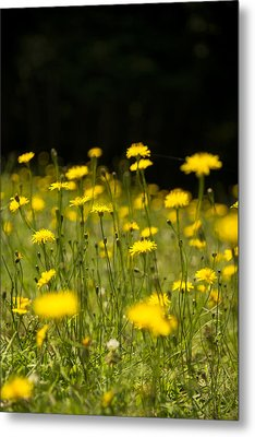 Meadow Maidens Metal Print by Aaron S Bedell