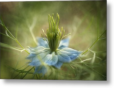 Medussa Metal Print by Faith Simbeck