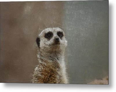 Meerkat 5 Metal Print by Ernie Echols