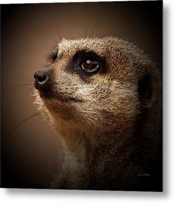 Meerkat 6 Metal Print by Ernie Echols