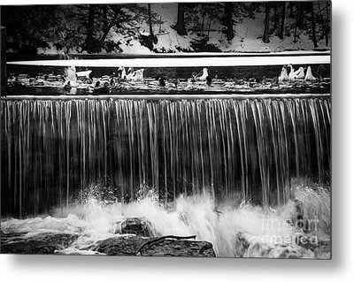 Meeting Place Metal Print by Sue OConnor
