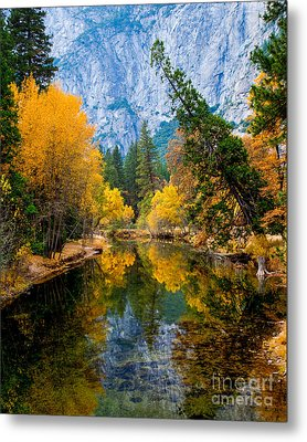 Merced River And Leaning Pine Metal Print by Terry Garvin