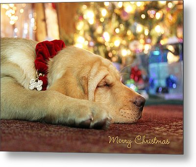 Merry Christmas From Lily Metal Print by Lori Deiter