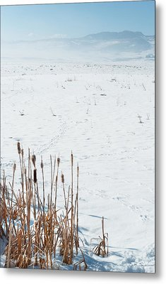 Minimalist Cattail Prairie In Colorado Metal Print by Julie Magers Soulen