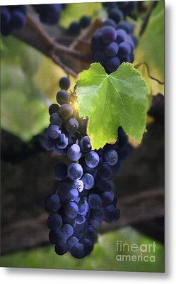 Mission Grapes II Metal Print by Sharon Foster