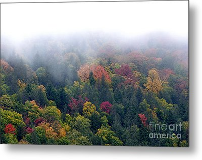 Mist And Fall Color Metal Print by Thomas R Fletcher