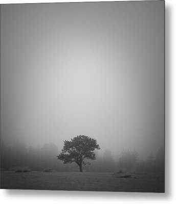 Misty Morning Metal Print by Patrick Downey