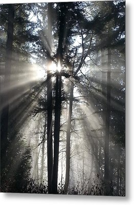 Misty Morning Sunrise Metal Print by Crista Forest