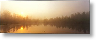 Misty Morning, Volvo Bog, Illinois, Usa Metal Print by Panoramic Images