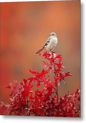 Mockingbird Autumn Metal Print by Bill Wakeley