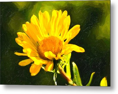 Moment In The Sun - Golden Flower - Northern California Metal Print by Mark E Tisdale