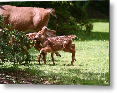 Mommy Is Here Time To Run Metal Print by Kym Backland