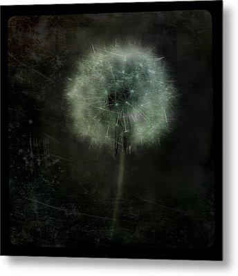 Moonlit Dandelion Metal Print by Gothicolors Donna