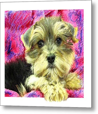Morkie Puppy Metal Print by Jane Schnetlage