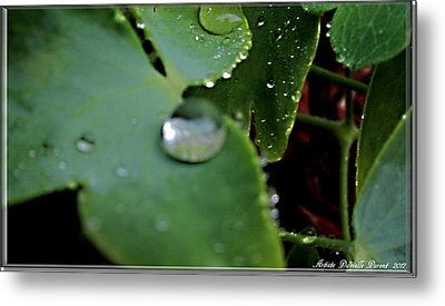 Morning Fresh Leaves With Droplets Metal Print by Danielle  Parent