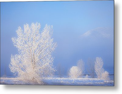 Morning Frost Metal Print by Darren  White