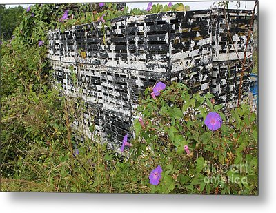 Morning Glories And Crab Traps Metal Print by Theresa Willingham