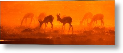 Morning Glory Metal Print by Christa Niederer