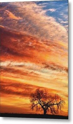 Morning Has Broken Metal Print by James BO  Insogna