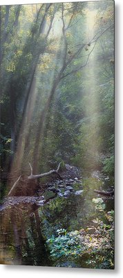 Morning Light Metal Print by Tom Mc Nemar