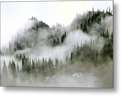 Morning Mist In Olympic National Park Metal Print by King Wu