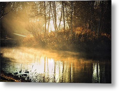Morning Rays Metal Print by Julie Palencia