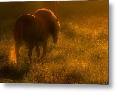 Morning Stroll Metal Print by Jim Vance