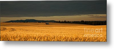 Morning's Glow Metal Print by Beve Brown-Clark Photography