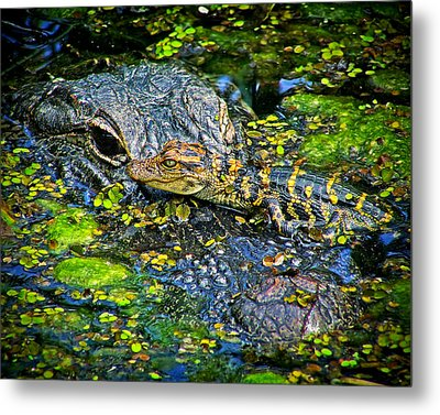 Mother And Baby Metal Print by Mark Andrew Thomas