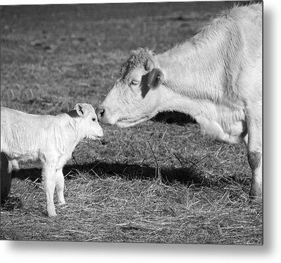 Mother And Child Metal Print by Steven  Michael