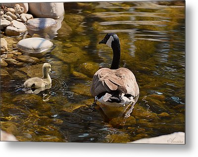Mother Goose Il Metal Print by Maria Angelica Maira