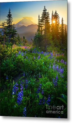 Mount Rainier Sunburst Metal Print by Inge Johnsson