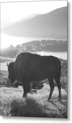 Mountain Wildlife Metal Print by Pixel  Chimp