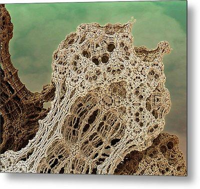 Mud Hive Metal Print by Kevin Trow