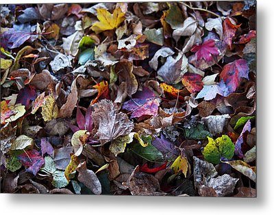 Multicolored Autumn Leaves Metal Print by Rona Black
