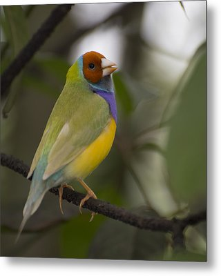 Multicolored Beauty Metal Print by Penny Lisowski