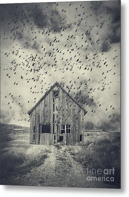 Murder Of Crows Metal Print by Edward Fielding
