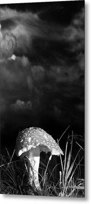 Mushroom Metal Print by Bob Orsillo