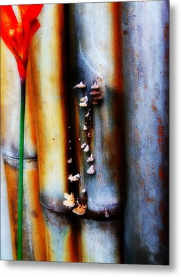 Mushroom On Bamboo 2 Metal Print by Lyle Barker