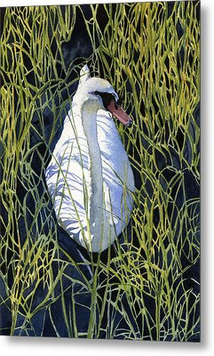 Mute Swan Metal Print by Heidi Gallo