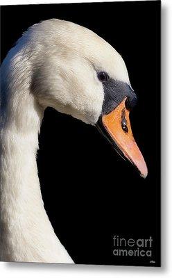 Mute Swan Metal Print by Wobblymol Davis