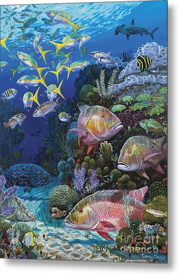 Mutton Reef Re002 Metal Print by Carey Chen