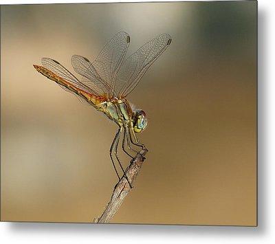 My Best Dragonfly Metal Print by Janina  Suuronen