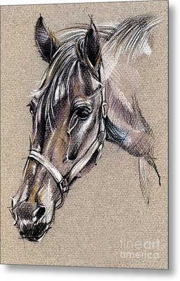 My Horse Portrait Drawing Metal Print by Daliana Pacuraru