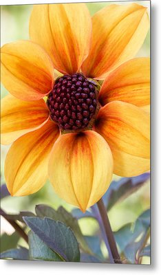 My Sunshine Metal Print by Heidi Smith